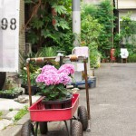 今週の365 DAYS OF TOKYO(7月1日~7月7日) ~ 梅雨の晴れ間の皇居