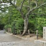 哲学の道でこれでもかというくらいたくさんのネコたちと出会う 夏の京都旅行2012 その15