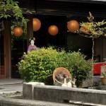 鴨川デルタで京都の町と川の近さを実感する 夏の京都旅行2012 その16