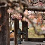 越生梅林内で井戸ポンプを発見する 越生の梅を見に行こう! その4