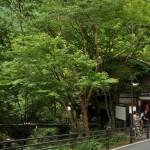 貴船口から叡山電車のきららに乗って一乗寺へ 夏の京都旅行2012 その26