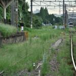 鶴見線浅野駅でも2匹のネコと出会う 夏の青春18きっぷの旅2011 鶴見線編 その4