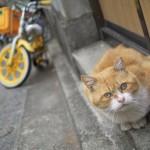 Nikon1 J1に単焦点レンズを付けて西新宿の路地裏で撮影したネコ特集