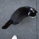 2月22日は「猫の日」ということなので西新宿の路地裏で出会ったネコを紹介します