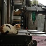 九份は猫の町でもあった! 台湾に行こう! その17