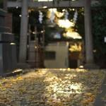 今週の365 DAYS OF TOKYO(1月7日~1月13日) ~ 新宿や汐留のライトアップなど