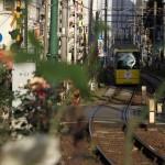 【Tokyo Train Story】バラの坂道(都電荒川線)