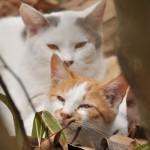 今市の路地裏で出会ったネコたち 冬の青春18きっぷの旅 栃木編 その12