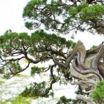 プロ写真家の福田健太郎さんの写真講座を参考にしてさらに盆栽の撮影をする! 「大宮盆栽×タムロン」大宮盆栽美術館で盆栽撮影にチャレンジ!ブロガーイベント その3 #盆栽フォト