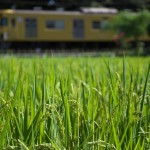 【Tokyo Train Story】秋恋し(西武西武園線)