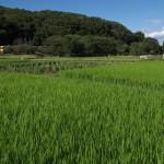 【Tokyo Train Story】緑豊かな田園地帯(西武西武園線)
