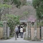 紫陽花で有名な明月院で早春の風景を眺める 偽修学旅行2013 鎌倉・江ノ島への旅 その3