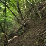水根沢の水の音を聞きながら水根沢林道を進む 奥多摩六ツ石山登山 その2