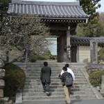 緑豊かな浄妙寺の境内でネコの撮影をする 偽修学旅行2013 鎌倉・江ノ島への旅 その7