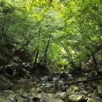 緑と苔に包まれた爽やかな水根沢林道 奥多摩六ツ石山登山 その3