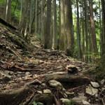 登っても登っても終わることのない水根沢林道を突き進む 奥多摩六ツ石山登山 その4