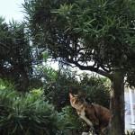 木登りネコの顛末記