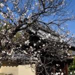 梅薫る嵐山を散策する 春の京都紀行 その19