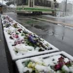 【Tokyo Train Story】雪の花壇(都電荒川線)