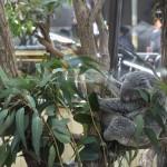 コアラ、プレーリードッグ、フクロウ、ペンギンも撮影しますよ 埼玉県こども動物自然公園へカピバラに会いに行く旅 その3