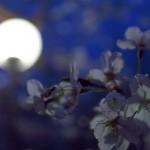 今週の365 DAYS OF TOKYO(4月29日~5月5日) ~ 春の夜の谷中近辺など