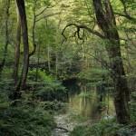 ブナの森の奥地にある蒼の世界、沸壷の池へ ぐるっと白神山地の旅 その16