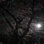 雨上がりの夜の谷中の墓地で夜桜の撮影をしてみた