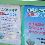 カピバラ温泉のすぐ近くで足湯に入りながらカピバラを眺める! 埼玉県こども動物自然公園へカピバラに会いに行く旅 その8