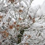 今週の365 DAYS OF TOKYO(2月4日~2月10日) ~ 東京雪景色