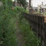 【Tokyo Train Story】草生す道(東急世田谷線)