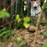 聖蹟桜ヶ丘の町に住まうネコたち 聖蹟桜ヶ丘散歩 その5
