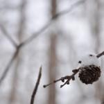 雪のシャワーも体験できる早朝の森林浴散歩 春の草津温泉旅行 その18