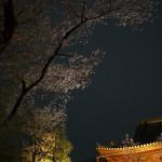 上野公園の散りゆく夜桜を撮影して、今年の桜の見納めとしました