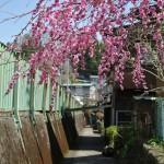 相模湖駅前でお昼ご飯にワカサギフライ定食を食す 春の青春18きっぷの旅 相模湖で探す春編 その3