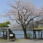 うら寂しい相模湖畔の廃ボート乗り場にも桜が咲く 春の青春18きっぷの旅 相模湖で探す春編 その4