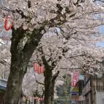 満開の桜が咲く相模湖畔でソフトクリームを食べながらお花見をする 春の青春18きっぷの旅 相模湖で探す春編 その5