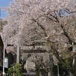 相模湖の町を見守る与瀬神社の桜模様 春の青春18きっぷの旅 相模湖で探す春編 その7