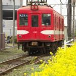 菜の花に彩られた仲ノ町駅周辺で撮影する 春の青春18きっぷの旅 銚子電鉄沿線散歩編 その3