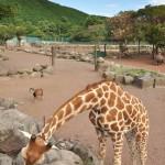 ホワイトタイガーなどの伊豆アニマルキングダムの大型動物たち 伊豆半島カピバラ行脚の旅 その7