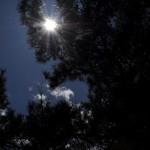 緑と光に溢れた山梨市の万力公園内を散策する 春の青春18きっぷの旅 山梨途中下車の旅編 その3