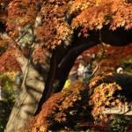 六義園の池の周りを歩いてみた 六義園紅葉散策2010 その3