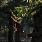 夕暮れ迫る日光東観荘周辺の景色をたっぷりと撮影する 大人だらけの偽修学旅行 その8
