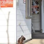 龍王峡から会津鉄道の車両に乗って再び鬼怒川温泉へ 冬の鬼怒川温泉への旅 その15