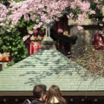 【東京春景色】上野公園の桜