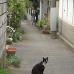 谷中の路地裏でネコと遊ぶ