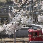 【Tokyo Train Story】春の田端操駅