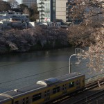 【Tokyo Train Story】外堀の桜(総武線)