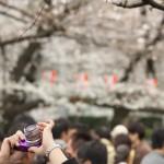 今週の365 DAYS OF TOKYO(4月8日~4月14日) ~ 台東区谷中の桜がある風景をたっぷりと