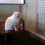 猫カフェならぬ猫うどん 早稲田のごんべえ