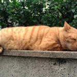 幸せそうな顔で眠る猫の写真を撮影